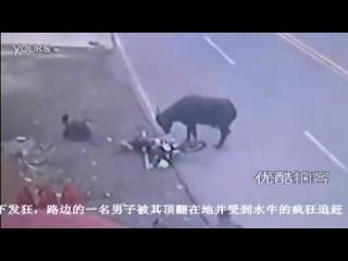 Бык на дороге